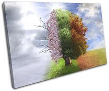 Four Seasons Tree Surrealism Fantasy SINGLE TOILE murale ART Photo Print