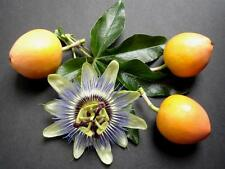 Passion fruit edible (Passiflora Edulis) - 35 Seeds