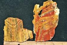ORCA:   Fantastic Rare Old & New Howardite Slabs, Nevada