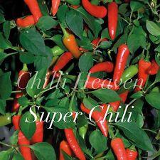HOT CHILLI PEPPER - Super Chili x 10 Seeds