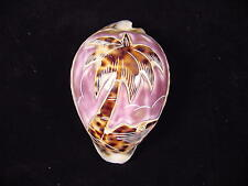 """Tiger Cowrie carved large Palm Tree """"A"""""""
