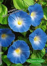 20 Semi/Seeds IPOMEA Rubro Coerulea Bleu