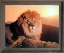 Lion King (Sunset) Big Cat Wild Animal Barnwood Framed Wall Decor Picture 19x23