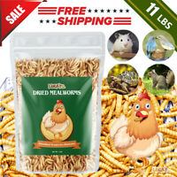 Dried Mealworms Bulk 11 LBS for chickens Birds Bluebirds Hamsters Hen Meal Worms