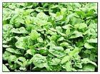 Giant Noble Spinach Seeds | NON-GMO | Heirloom | Fresh Garden Seeds