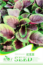 1 Pack 30 Edible Amaranth Seeds Amaranthus Tricolor Red Spinach Vegetable C081