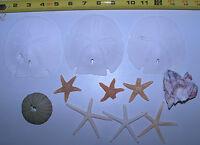 Mixed Rare Starfish, Coral, Sand dollars Shells Craft #2 Grade Decor Lot 14-L