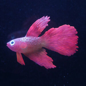 Artificial Aquarium Fake Vividly Swim Clownfish Betta Fish Tank Plastic Decors