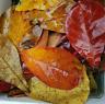 Indian Almond Catappa Leaves A+  Ketapang for Fish, Shrimp, Aquarium Care