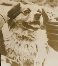 PHOTO ASSOCIATED PRESS 1947 + Le CHIEN d'un pêcheur photographié au DANEMARK