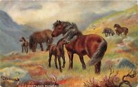 POSTCARD   HORSES  SHETLAND  PONIES    TUCK