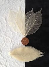 25 Skeleton Leaves Natural leaf see through Medium invitation Soap Candles