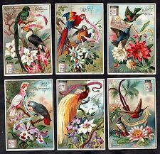 Exotic Birds & Flowers Card Set Liebig 1897 Parrots Colibri Orchid Toucan Cacti