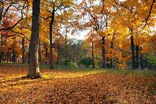 Fototapete VLIES-WALD-(3081S)-Bäume Lichtung Sonne Landschaft Natur Buche Wiese