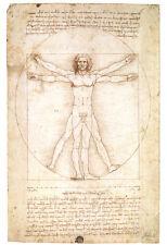 Vitruvian Man 1492 Leonardo Da Vinci Art Poster By  Leonardo da Vinci - 13x19