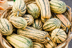 Pumpkin Bush Delicata - Squash - 10+ seeds - Semillas - Graines - Samen