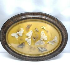 Butterfly Moth Bugs Floral Taxidermy Display Vintage Oval Framed & Glass Antique