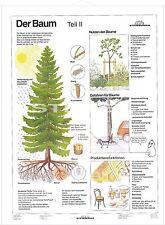 Alles über Bäume Teil 2 Schulkarte Lehrtafel Schulwandkarte 120x160cm   7515