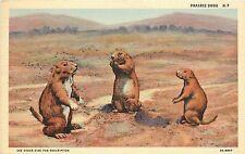Unposted Curt Teich Linen Postcard: Prairie Dogs