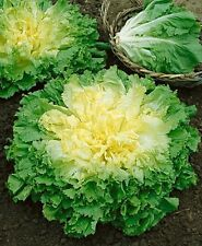 Seeds Endive Leaf Hearth Frise Chicory Green Lettuce Heirloom Organic Ukraine