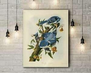 John James Audubon: Blue Jay (Birds of America). Canvas Art Print