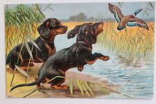 17258 AK zwei Dackel jagen Ente 1904 PC dachshund