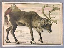 Original vintage school chart of Reindeer, litograph