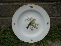 Fine antique Meissen porcelain plate -  German - hand painted bird & insects