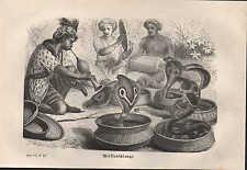 Lithografie 1878: BRILLENSCHLANGE. Holzstich