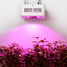 200W COB Led Grow Light for indoor medical herb veg fastly bloom fruiting growth