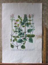 "Vintage Engraving,GULEOPSIS,Nettle,C.1740,WEINMANN,Botanical,20x13.5"",Mezzotint"