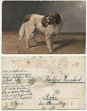 31845 - Bernhardiner - Hund - Ansichtskarte, gelaufen Mühlhausen 1912 - Steno