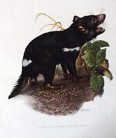 Impression Affiche Histoire Naturelle le Diable de Tasmanie Sarcophilus harrisi