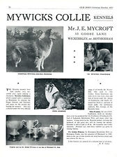 ROUGH COLLIE OUR DOGS 1951 DOG BREED KENNEL ADVERT PRINT PAGE MYWICKS KENNEL