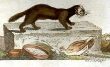 Wilhelm's Naturgesehichte - Hand Colored Engraving -1809- THREE WEASELS
