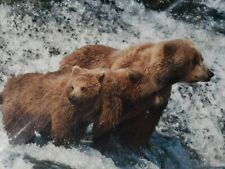 Signed Chuck Bartlebaugh Matted 8 X 10 Grizzly Bear Photograph Montana Artist