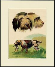 GERMAN WIREHAIRED POINTER LOVELY DOG PRINT MOUNTED READY TO FRAME