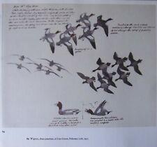 Beau Tunnicliffe Oiseau Imprimé ~ Canard