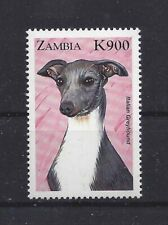 Dog Art Head Study Portrait Postage Stamp Italian Greyhound Zambia 1999 Mnh