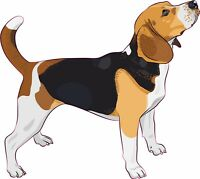 5in x 4.5in Beagle Bumper Sticker Vinyl Right Window Sign Decal Decals Stickers