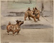 NORWICH TERRIER DOG LIMITED EDITION PRINT DRY-POINT ENGRAVING by Henry Wilkinson