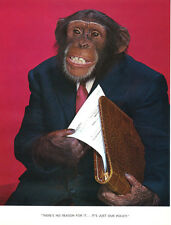 1 Vintage Art Photo Page from Chimp Chat Book 1960 Monkey Insurance Agent