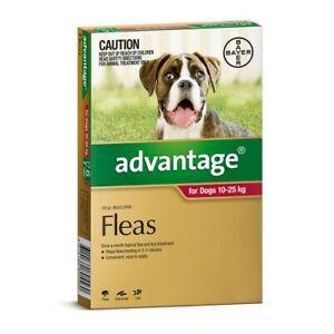 Advantage Flea Treatment for Large Dogs 10-25kg Red