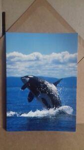 Global Journey Greeting Card - Ocean Wonder - Killer Whales
