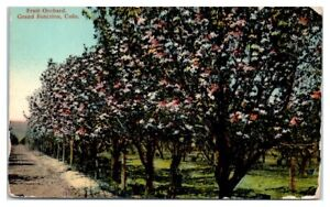 Early 1900s Fruit Orchard, Grand Junction, CO Postcard
