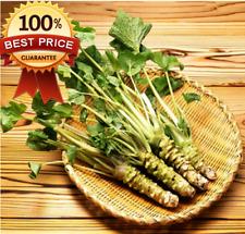 200pcs++ Seeds Of Wasabi Japanese Horseradish Sushi Ingredient Herb Spice!HOT