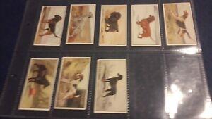 Rare H Stevens Salisbury Dogs 1923 8/20 Cigarette Cards