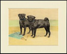 PUG LITTLE BLACK DOGS LOVELY DOG PRINT MOUNTED READY TO FRAME