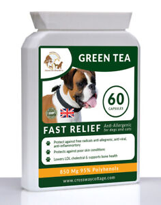Organic Green Tea Extract Immunity Boost + Vitamins for Dogs & Cats 60 Capsules