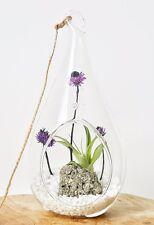 "Pyrite Air Plant Terrarium Kit, 7.5"" Hanging Glass Teardrop"